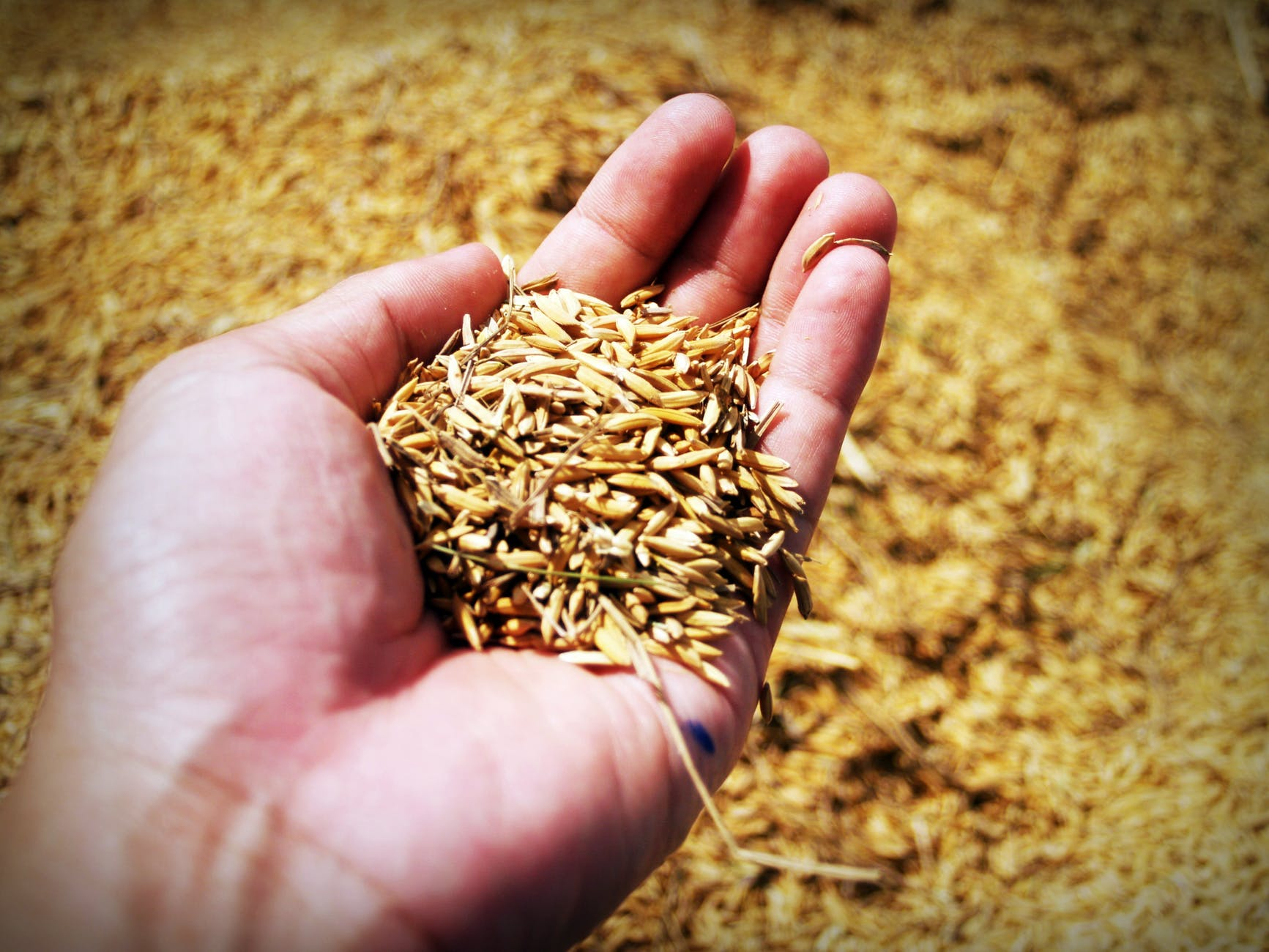 handful of barley